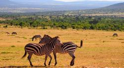 Lien voyage au Kenya