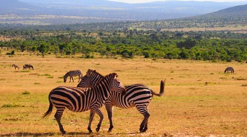Pointe du monde Circuit au Kénya